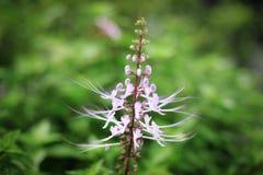 Plant, Flora, Flower, Plant Stem Stock Photo