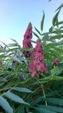 Plant, Flora, Flower, Shrub royalty free stock photo