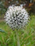 Plant, Flora, Flower, Subshrub stock images