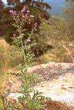 Plant, Flora, Flower, Subshrub royalty free stock photography