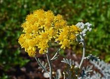 Plant, Flora, Flower, Subshrub stock photo