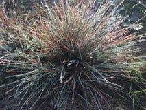 Plant, Flora, Grass Family, Grass royalty free stock photo