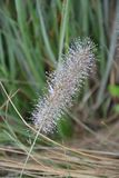 Plant, Flora, Grass Family, Grass stock photography