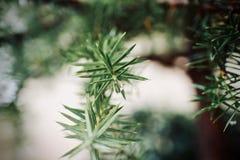 Plant, Flora, Leaf, Close Up stock images