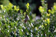Plant, Flora, Leaf, Flower stock photos