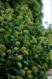 Plant, Flora, Subshrub, Herb stock photography