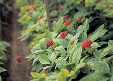 Plant. Flower stock photo