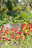 Plant & flower border Stock Image