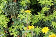 Plant, Flower, Flora, Flowering Plant royalty free stock photo