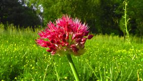 Plant, Flower, Flora, Grass stock photos