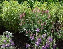 Plant, Flower, Flora, Shrub royalty free stock photos