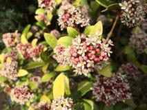 Plant, Flower, Flora, Shrub royalty free stock image