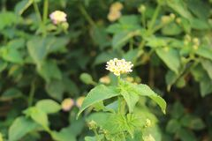 Plant, Flower, Flora, Subshrub royalty free stock photo