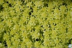 Plant, Flower, Flora, Subshrub stock photos