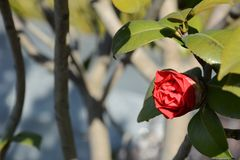 Plant, Flower, Flowering Plant, Branch royalty free stock image
