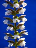 Plant, Flower, Flowering Plant, Flora Stock Photo