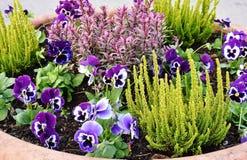 Plant, Flower, Flowering Plant, Purple stock photo