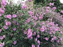 Plant, Flower, Flowering Plant, Rose Family stock image