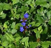 Plant, Flower, Flowering Plant, Subshrub stock images