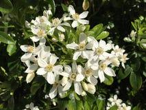 Plant, Flower, Flowering Plant, Subshrub stock image