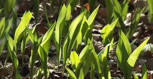 Plant, Flower, Grass, Flora royalty free stock photos