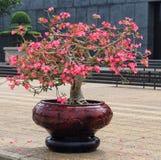 Plant, Flower, Houseplant, Flowerpot royalty free stock photos