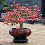 Plant, Flower, Houseplant, Flowerpot stock photography
