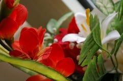 A plant Stock Photos