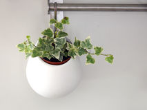 Plant in flower-pot Stock Photography