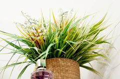Plant in flower pot and bottle of perfume Stock Photos