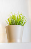 Plant in a flower pot. Stock Image