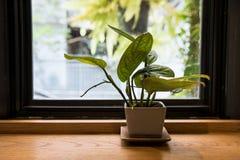 Plant on flower pot near window. Of coffee shop Stock Photo