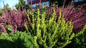Plant, Flower, Shrub, Herb