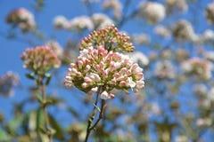 Plant, Flower, Sky, Flora Stock Photography