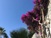Plant, Flower, Sky, Pink stock photo