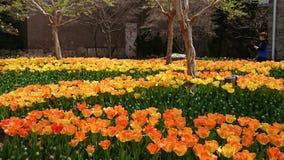 Plant, Flowering Plant, Flower, Botanical Garden royalty free stock photography