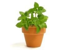Plant in flowerpot Stock Photo