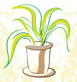 Plant in a flowerpot. Indoor Stock Photography