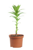 Plant in a flowerpot Stock Image