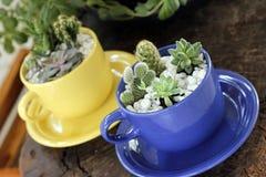 Plant, Flowerpot, Cactus, Herb