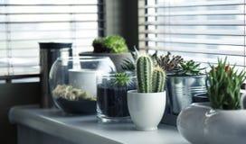 Plant, Flowerpot, Cactus, Houseplant stock image