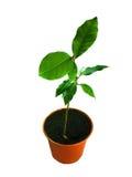 Plant in flowerpot over white Stock Image