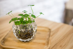 Plant in flowerpot on shelf. Against rustic stone wall and wooden table royalty free stock photos