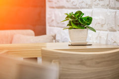 Plant in flowerpot on shelf against rustic stone wall. And wooden table stock image
