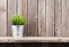 Plant in flowerpot on shelf. Against rustic wooden wall. View with copy space stock photo