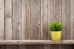 Plant in flowerpot on shelf. Against rustic wooden wall. View with copy space stock photos