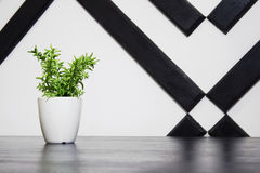 Plant in a flowerpot on the table Stock Photos