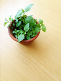 Plant in flowerpot on wooden table Stock Photography