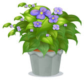 A plant with flowers Stock Photo