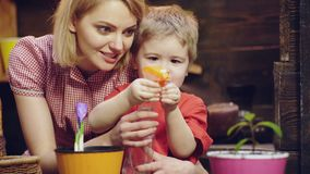 Plant flowers. Woman with a boy plant flowers. Family plant flowers. Growing plants and sprouts germination. Spring time